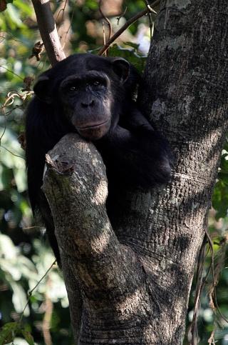 Zoe in her tree
