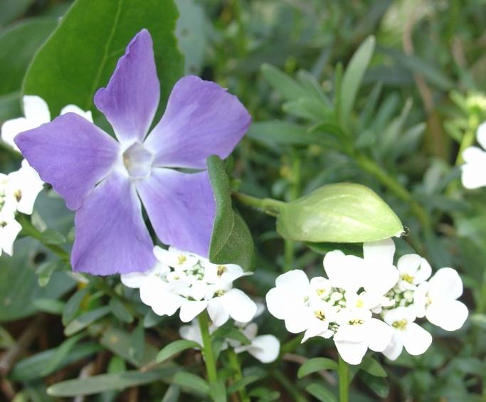 Un jardin fleuri en avril - Au jardin de mon pere les lilas sont fleuris ...