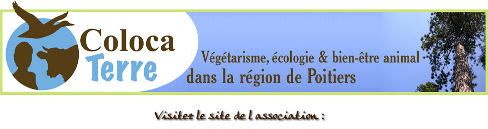 Coloca Terre, index du forum