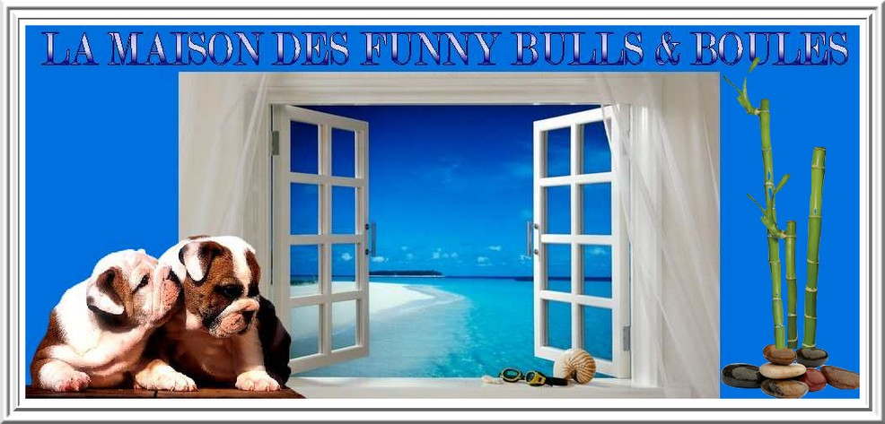 LA MAISON DES FUNNY BULLDOG, BOULEDOGUE ET BOSTON