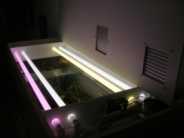 le forum carnivore afficher le sujet terrarium paysager de gwen. Black Bedroom Furniture Sets. Home Design Ideas
