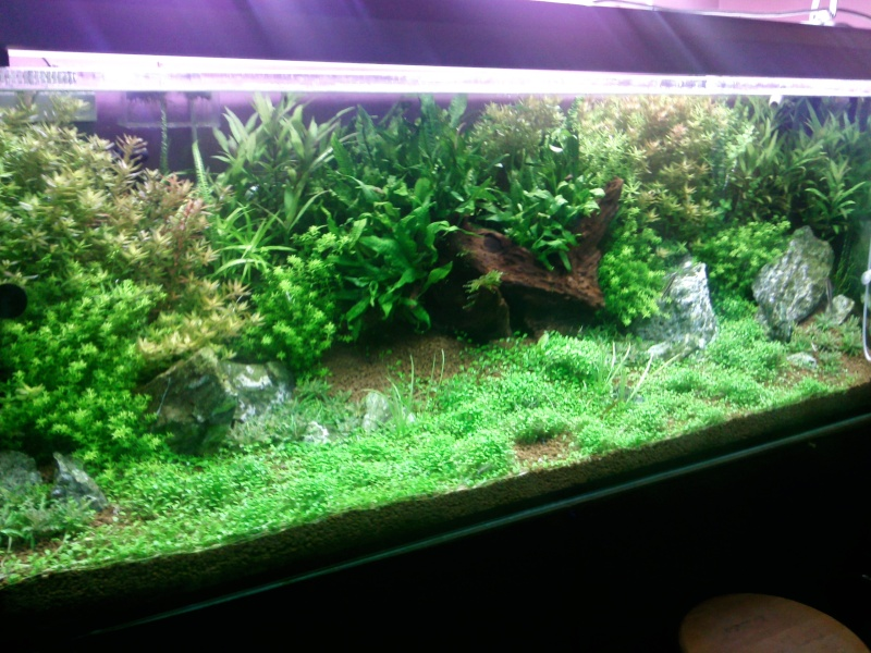 Mon 600l plant for Aquarium 600l