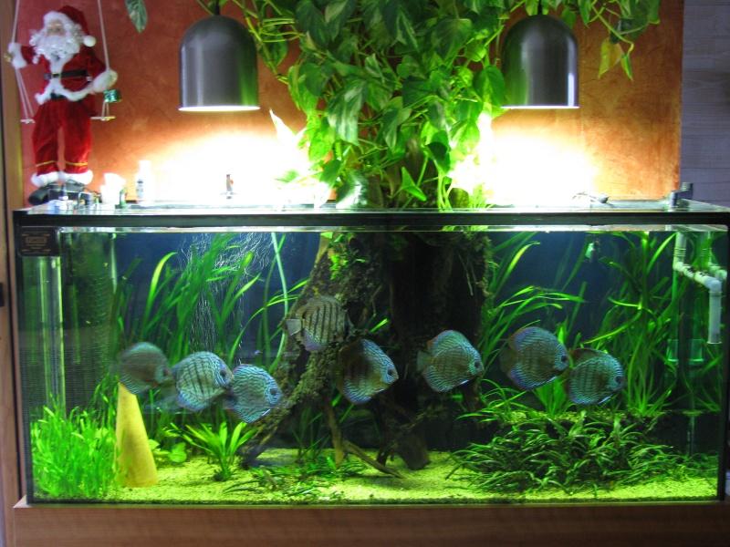 Bac ouvert ou ferm for Aquarium ouvert