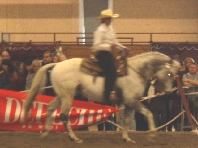Salon albi en mars for Salon du cheval albi