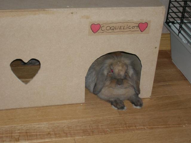 Comment fabriquer une maison - Jeux pour lapin a fabriquer ...