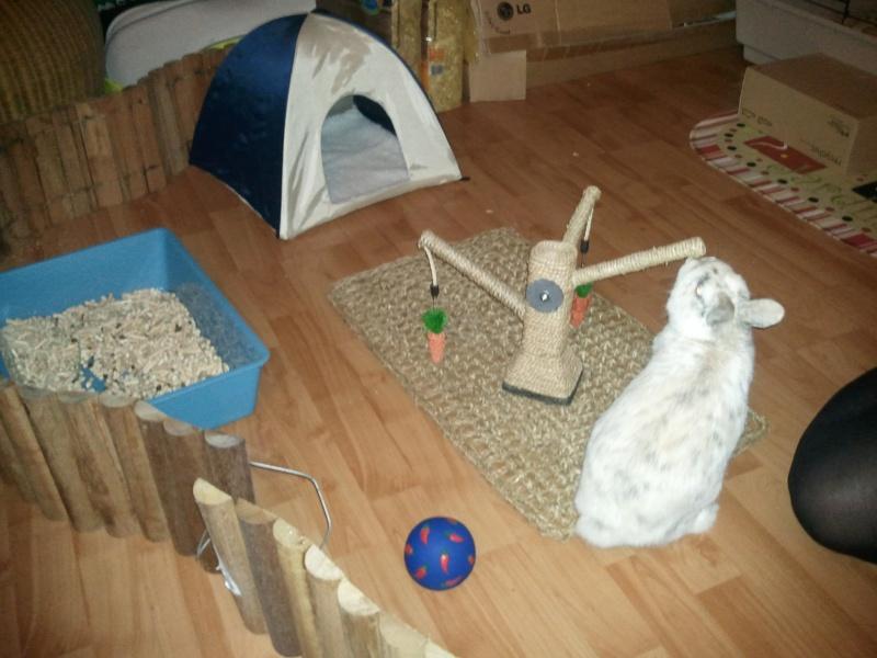 Enclos lapin nain - Jeux pour lapin a fabriquer ...