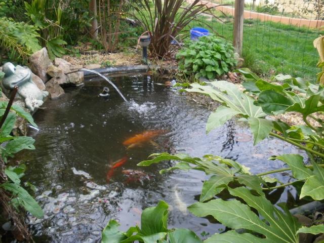 Mon petit bassin qui redemarre - Petit bassin baignade colombes ...