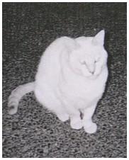 chat perdu (1)