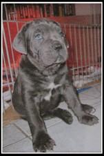 chien a vendre (2)