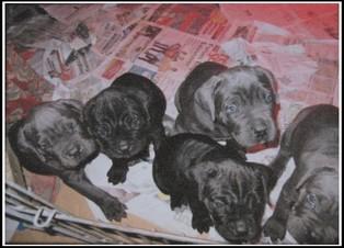 chien a vendre (3)