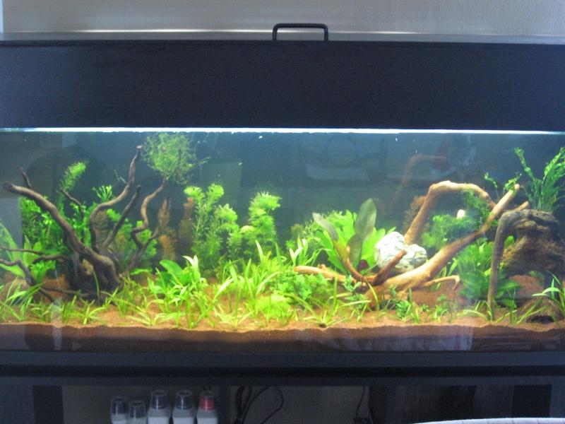 Lancement de mon bac de 300l forum aquarium for Aquarium bac