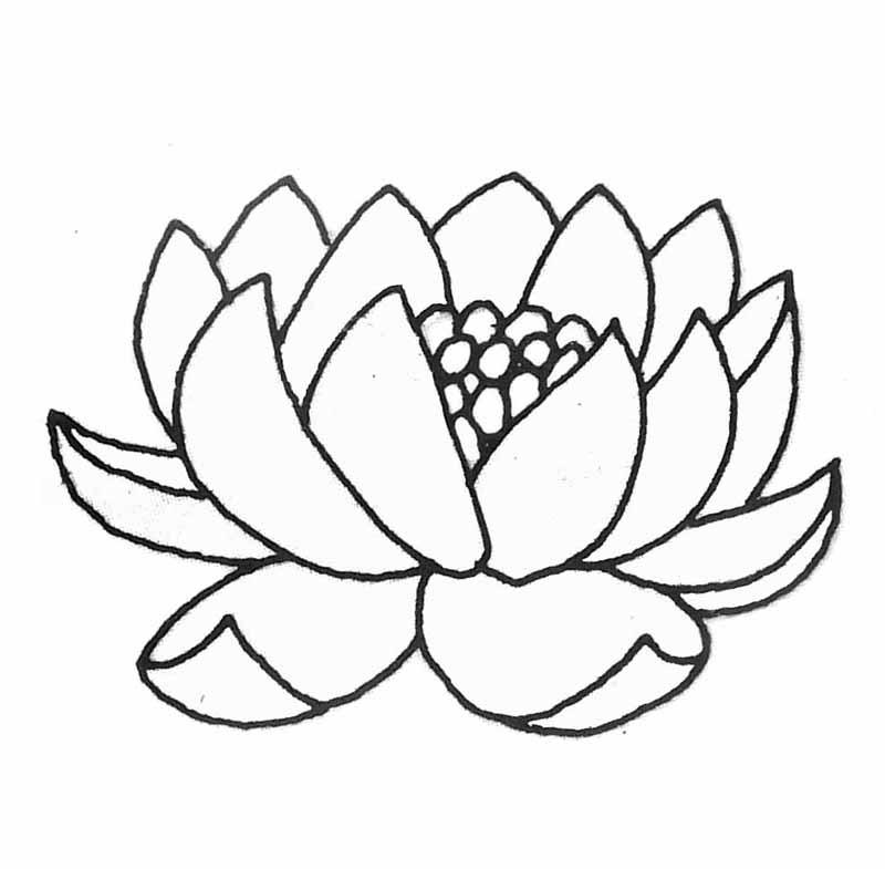 Fabriquer un abat jour n nuphar - Nenuphar dessin ...