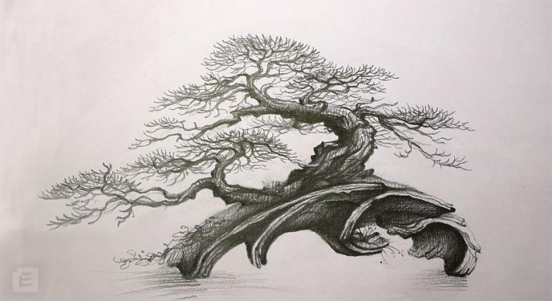 My new work atelier bonsai element page 3 - Dessin bonzai ...