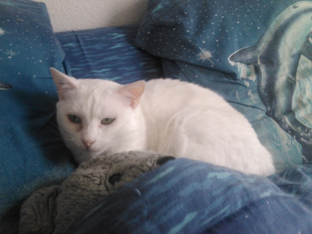 flocon chat blanc 08 333ff adopt page 2. Black Bedroom Furniture Sets. Home Design Ideas