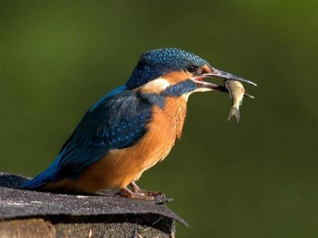 reconnaitre les oiseaux de nos jardins page 1