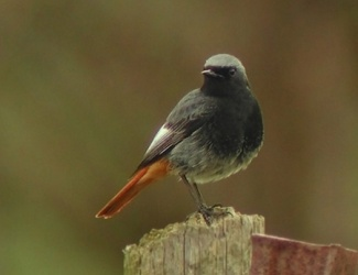 Reconnaitre les oiseaux de nos jardins for Oiseau longue queue ventre jaune