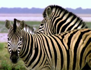 zoologie documentaire WWF semaine du développement durable Arte émission idéologie de la protection et de la conservation de la nature parcs naturels extinction massive d'espèce voie de disparition