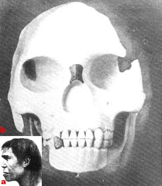 paléoantropologie Charles Dawson Arthur Smith Woodward Piltdown décembre 1912 crâne humain le plus ancien chainon manquant canular supercherie