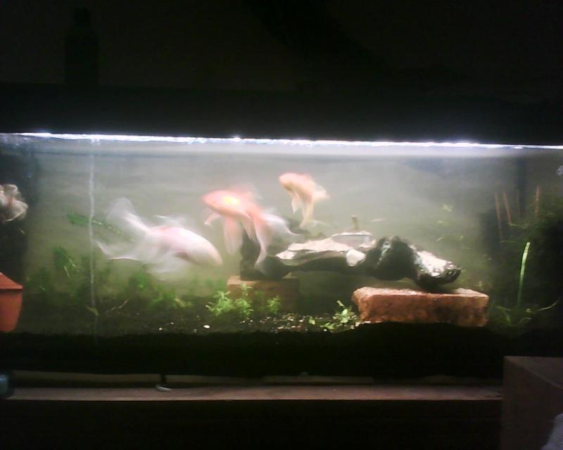 aquarium juwel 120 litres poissons rouges photos page. Black Bedroom Furniture Sets. Home Design Ideas