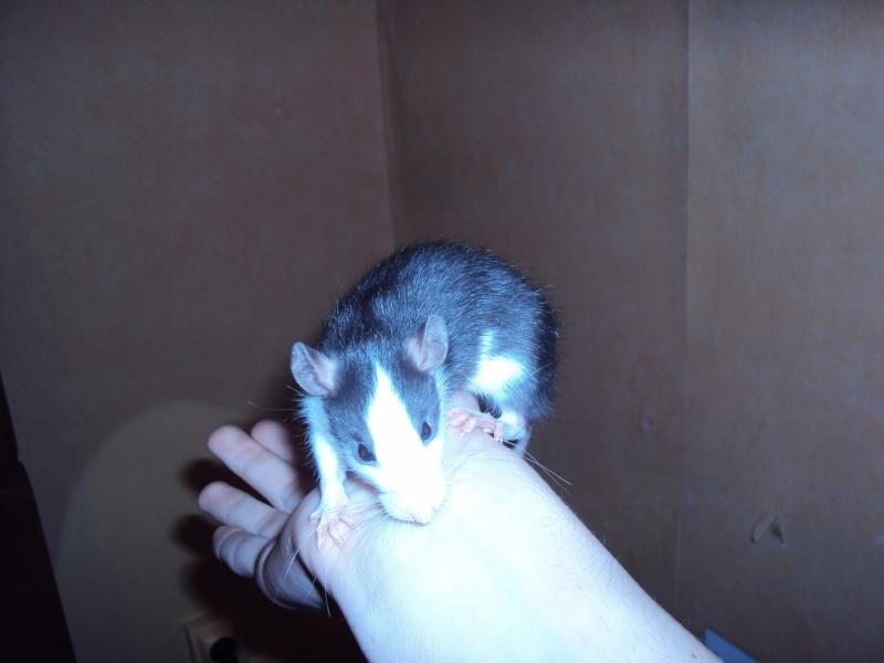 rats_010