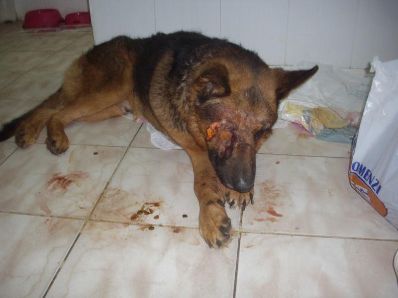 Dog Eats Human And Dog Feces