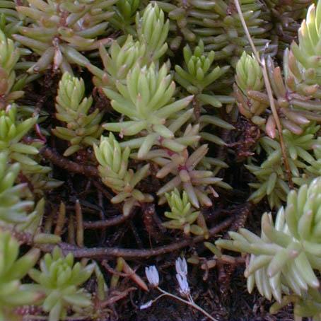 Quelles plantes grasses - Plantes grasses d exterieur ...