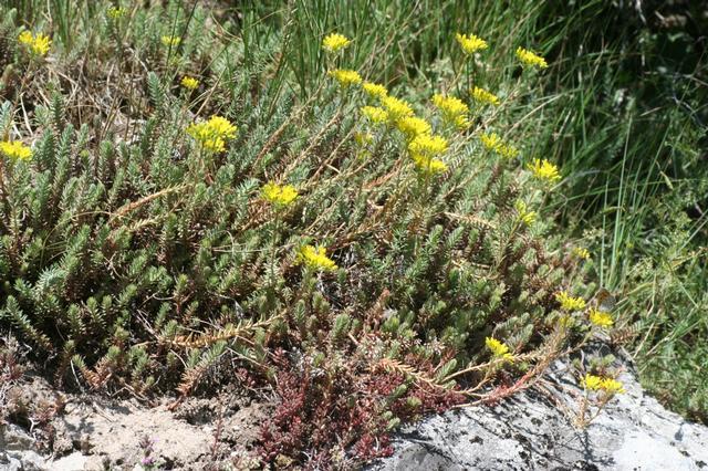 Quelles plantes grasses page 1 - Quelles sont les plantes que l on peut bouturer ...