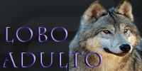 lobo adulto