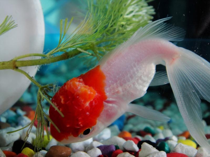 Poisson en d composition aidez moi svp for Bac hopital poisson