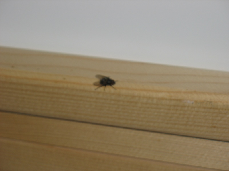Liminer mouches maison chasser les mouches naturelle for Astuce contre les mouches dans la maison
