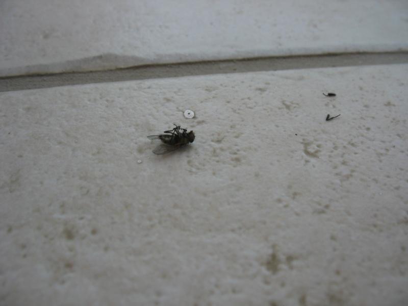 mouche dans la maison en hiver
