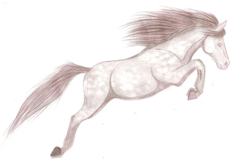 Noony4 39 s gallery - Dessiner un cheval facilement ...