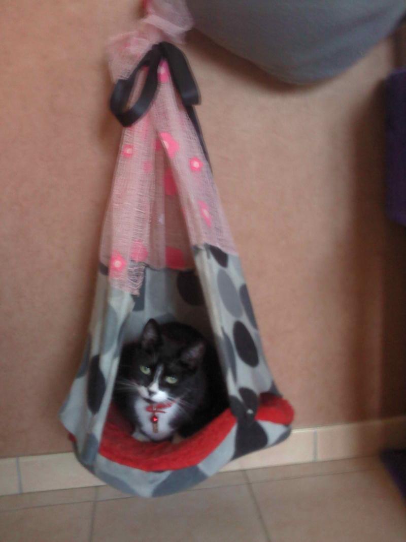 Id e bricolage pour nos p 39 tites b tes - Mon chat me colle plus que d habitude ...