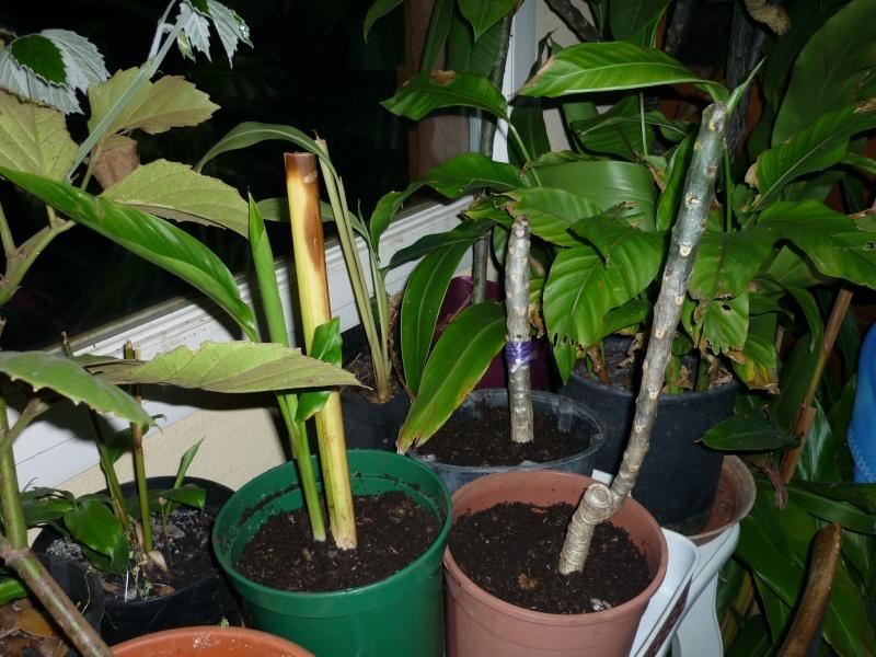 Essai de commande en thailande page 1 for Commande de plantes