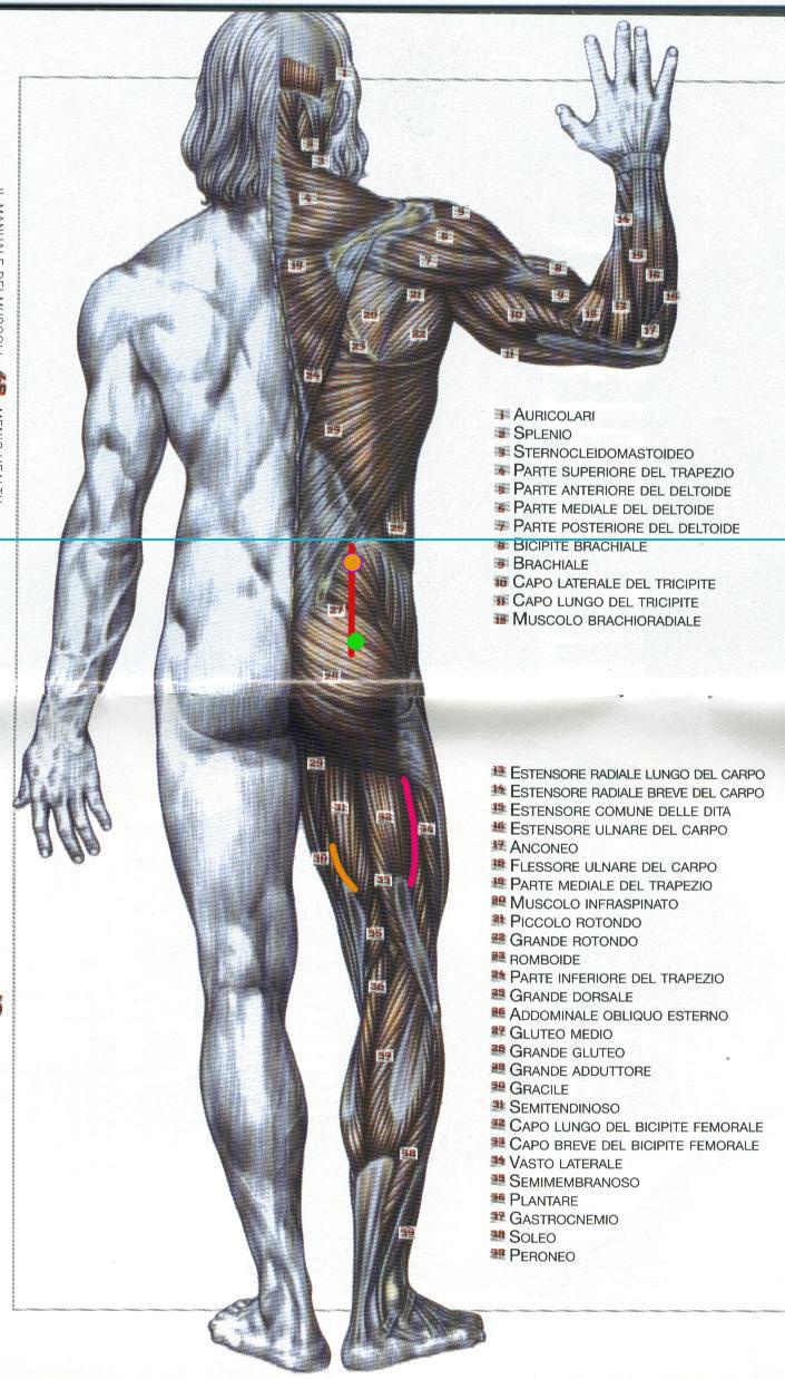 Crema di trattamento varicosity posizione