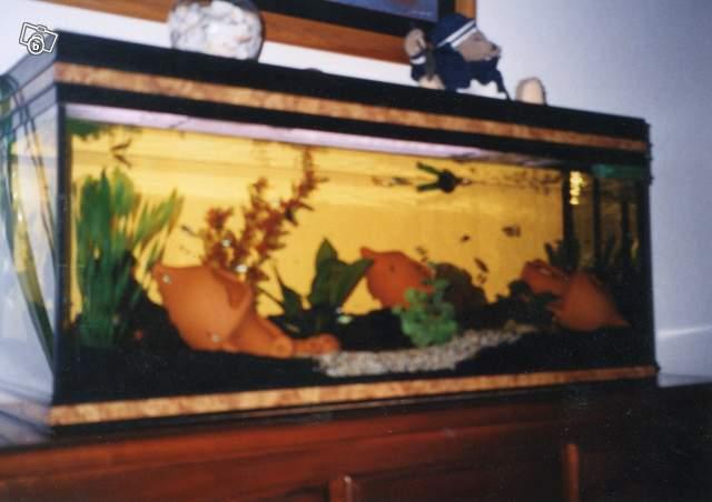 Besoins de conseils achat aquarium pour poisson rouge for Aquarium avec filtre pour poisson rouge